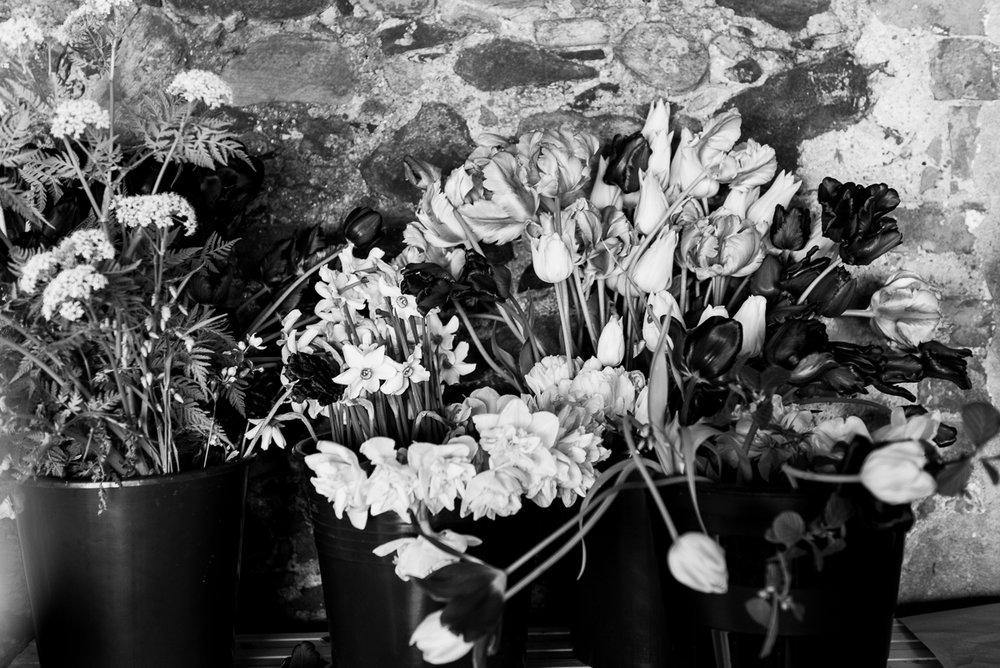 millpondflowerfarm_jotennant002.jpg