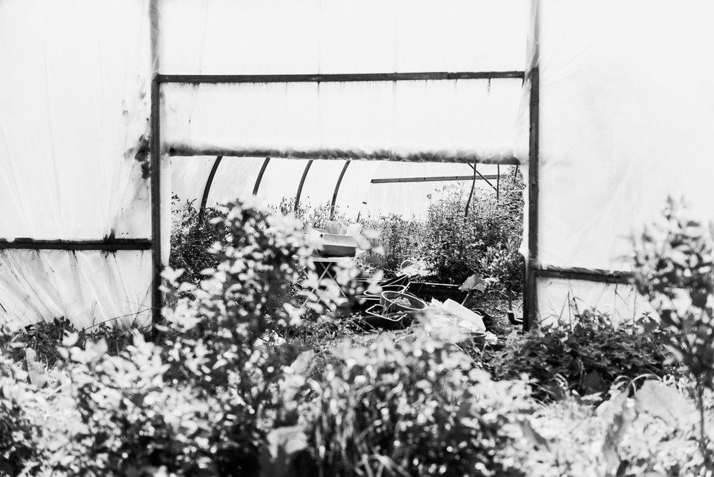 millpondflowerfarm_jotennant003.jpg