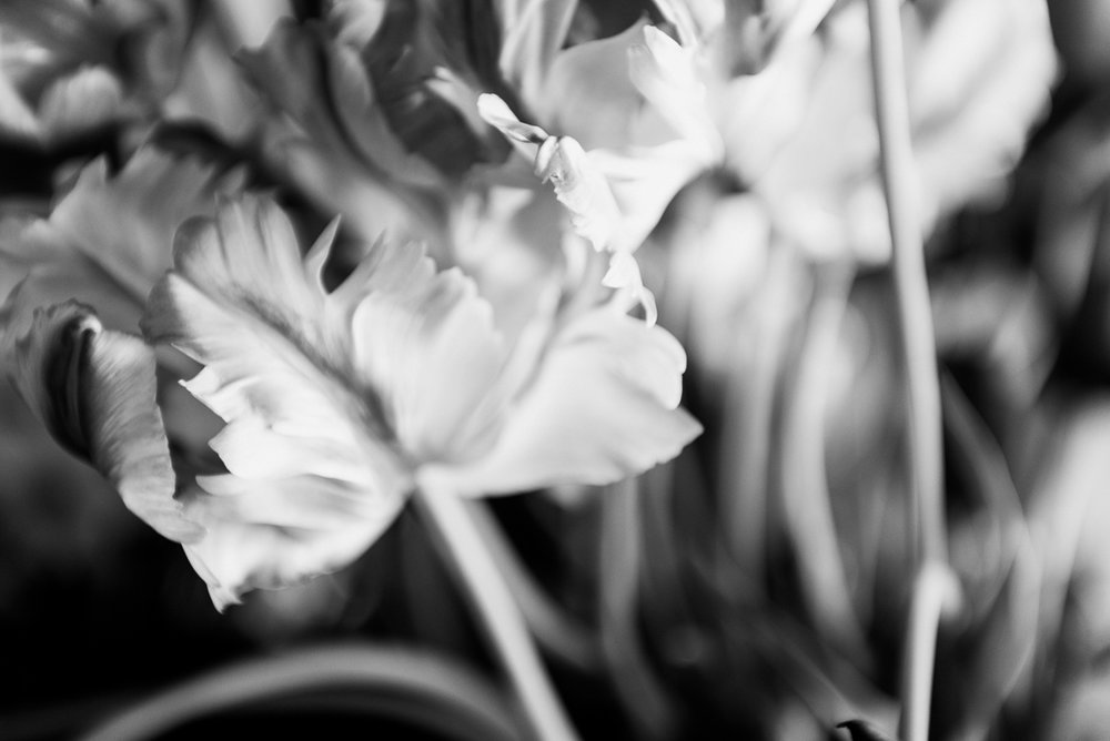 millpondflowerfarm_jotennant033.jpg