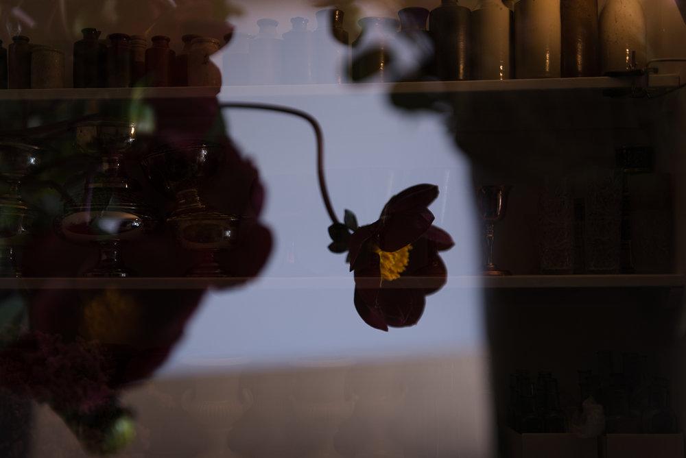 flowerproject_rachael_paula_jotennant030.jpg