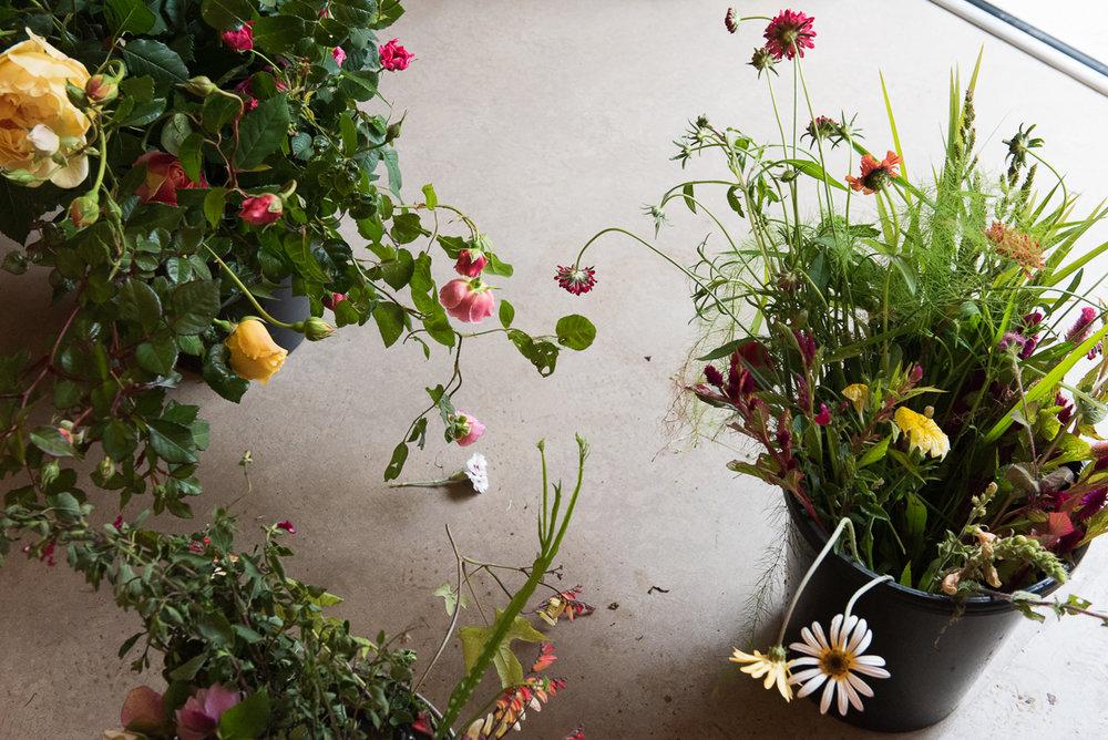 botanicals_jotennant 03002-5.jpg