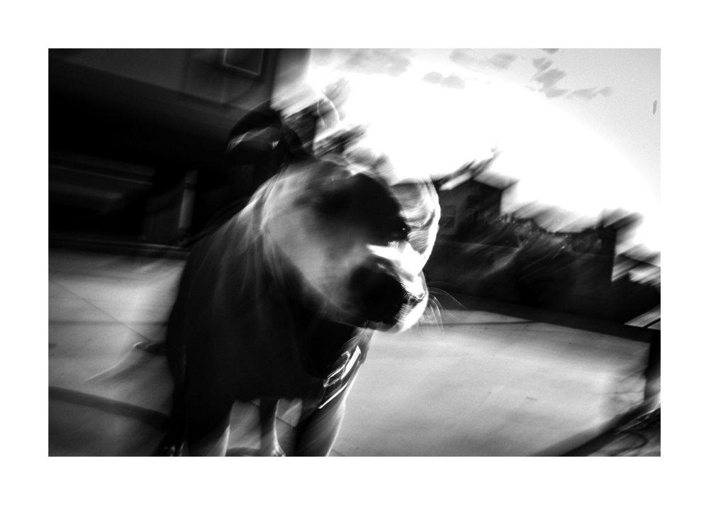 Dog-4871.jpg