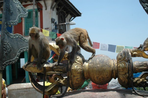 Monkeys in Monkey Temple.jpg