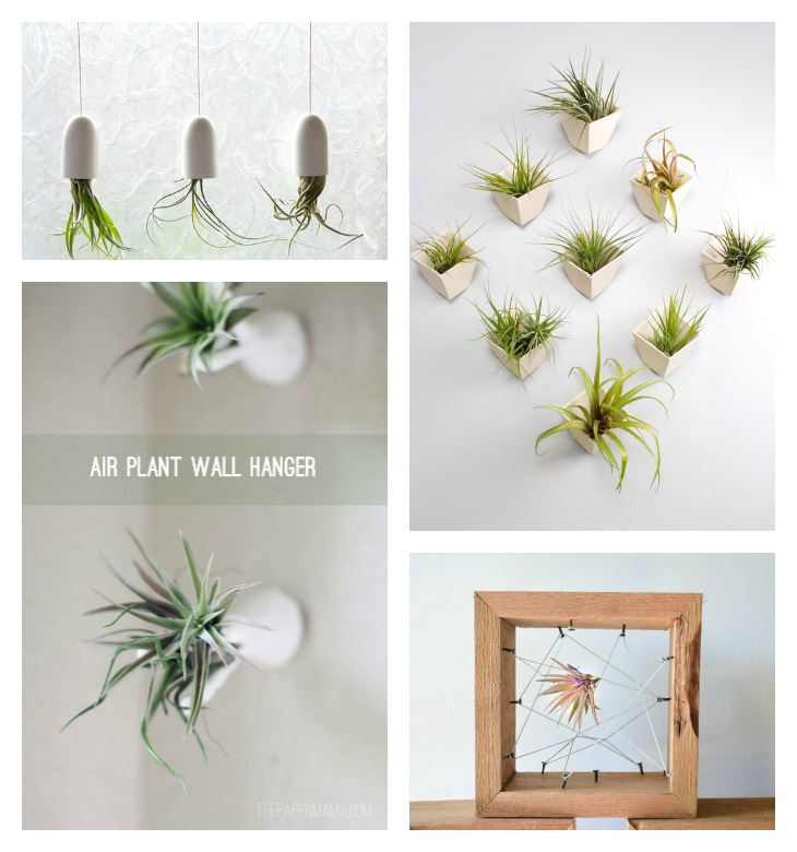 Diy Air Plants Succulents Diy Roundup Very Shannon