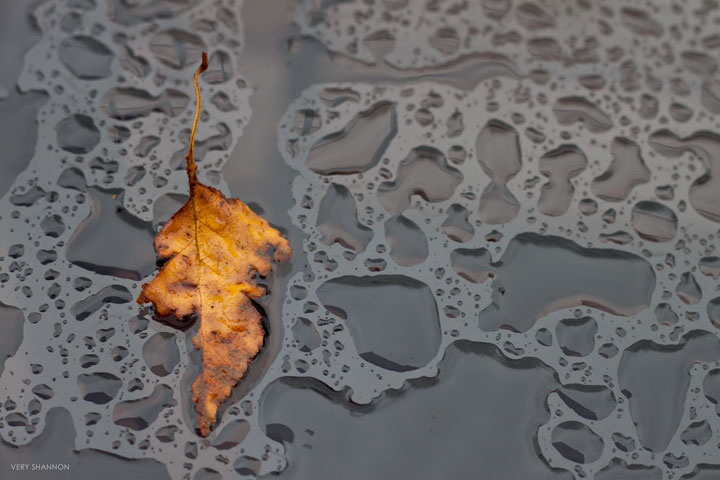 Rain & Leaf | VeryShannon.com