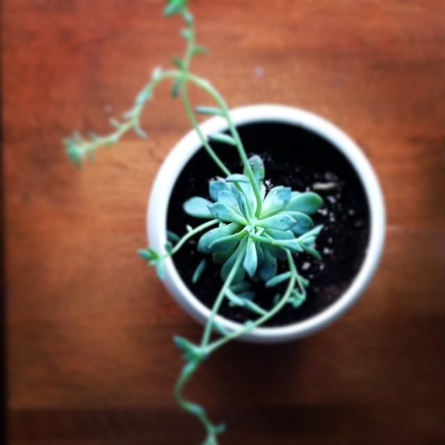 Succulent by VeryShannon.com