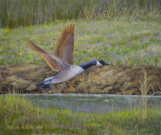 Gander in Flight, 10 x 12, Oil on Board by William R. Beebe