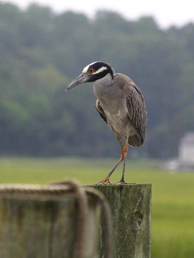 Shy bird!