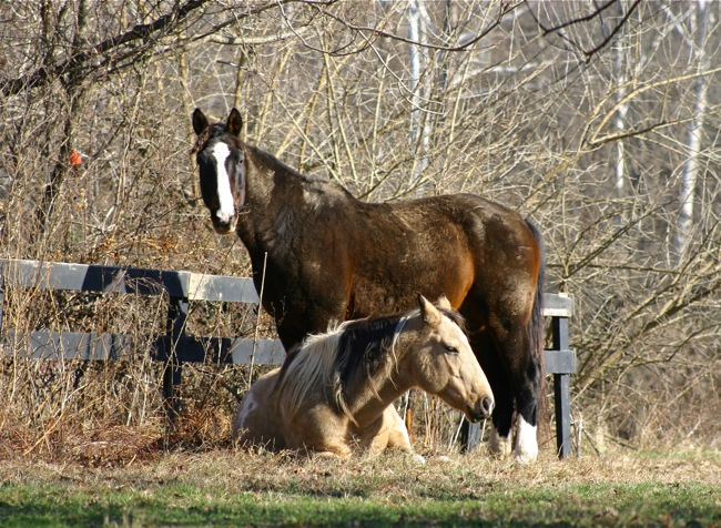 Welbourne horses