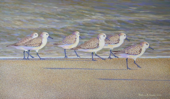 The Sanderling Six  by William R. Beebe, 12 x 20, oil on board, $2500