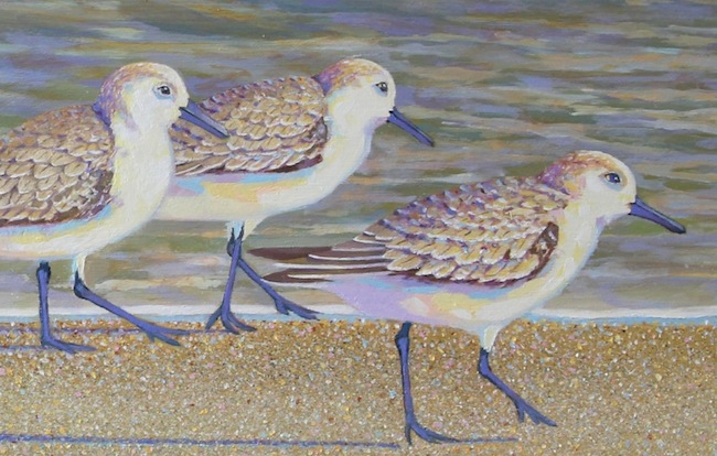 The Sanderling Six  (detail shot) by William R. Beebe