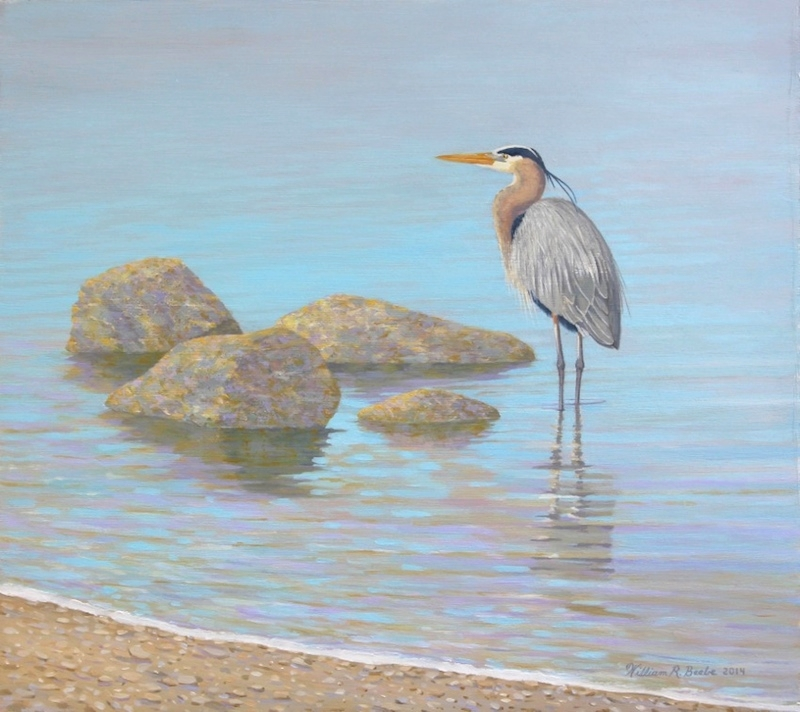 Morning-Calm-by-William-R-Beebe.jpg
