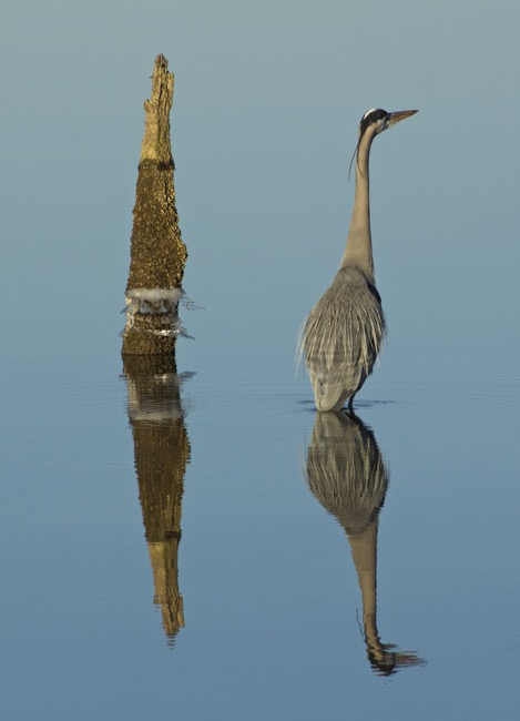 Parallel Reflections photo by William R. Beebe