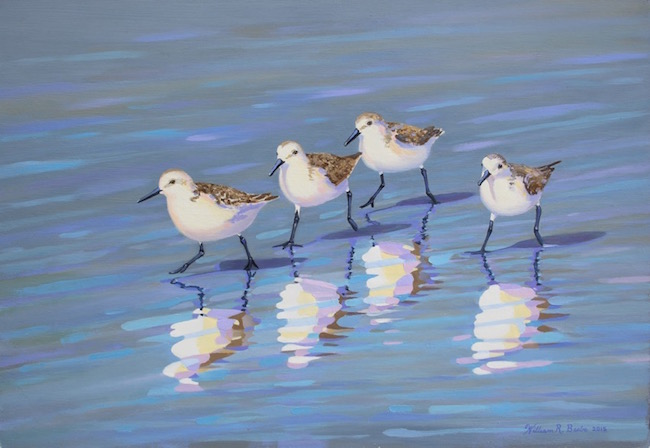 Sanderling Strut  by William R. Beebe, 12 x 18, Oil on Board, $2400