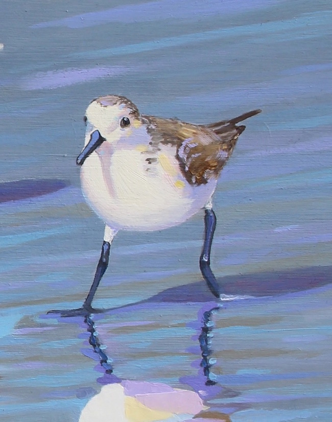 Sanderling Strut(detail shot) by William R. Beebe