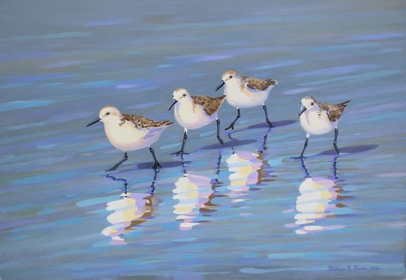 Copy of Sanderling Strut by artist William R. Beebe