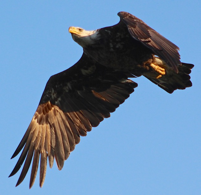 FREEDOM~ Soaring into the wild blue yonder!