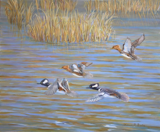 Pitt Street Mergansers by William R. Beebe, 12 x 14, oil on board, $850 (unframed)