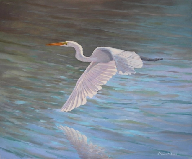 Great White    by William R. Beebe, 30 x 36, Oil on canvas, $4500