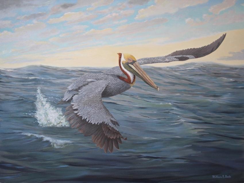 Pelican Power by artist William R. Beebe