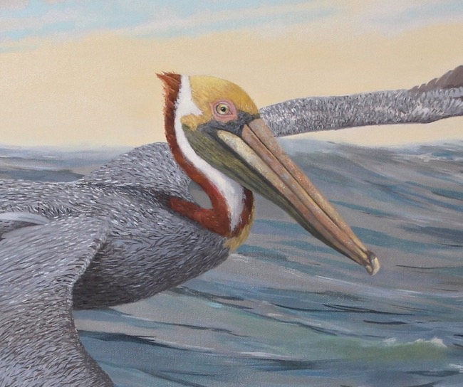 Pelican Power   by William R. Beebe, head detail shot
