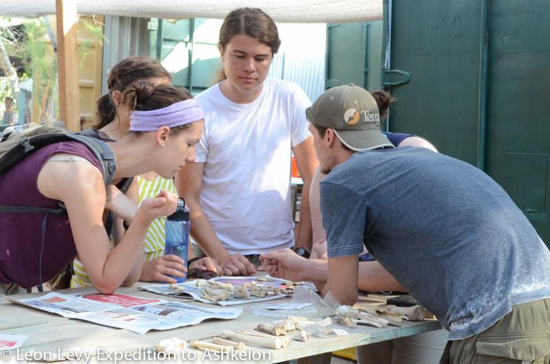 Volunteers learn about animal bones