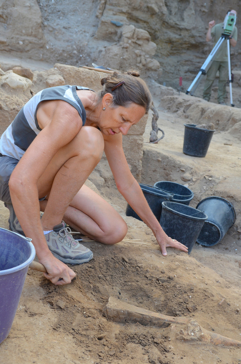 Excavating a donkey scapula