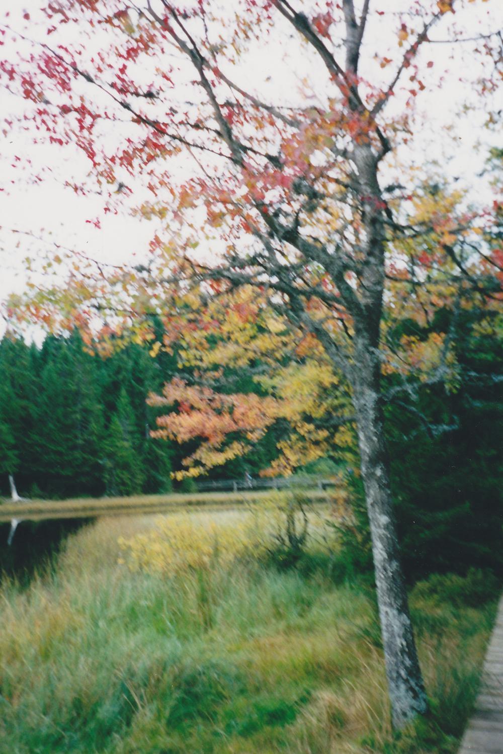 Autumn, Switzerland, 2001.