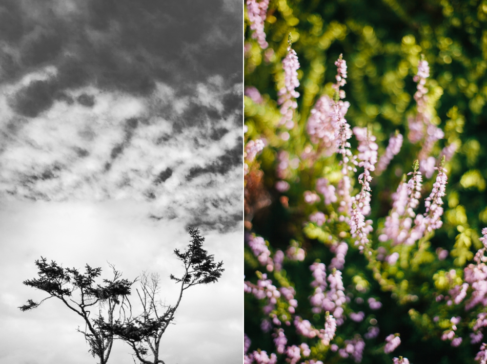 BrieMullin_PortlandPhotographer_0702.jpg