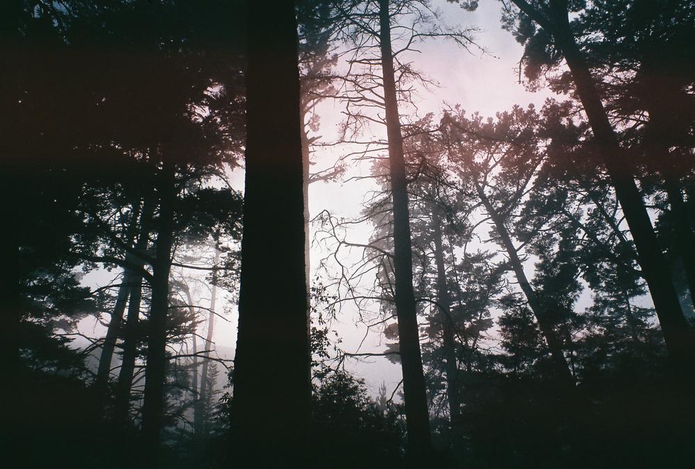 forestfog.jpg
