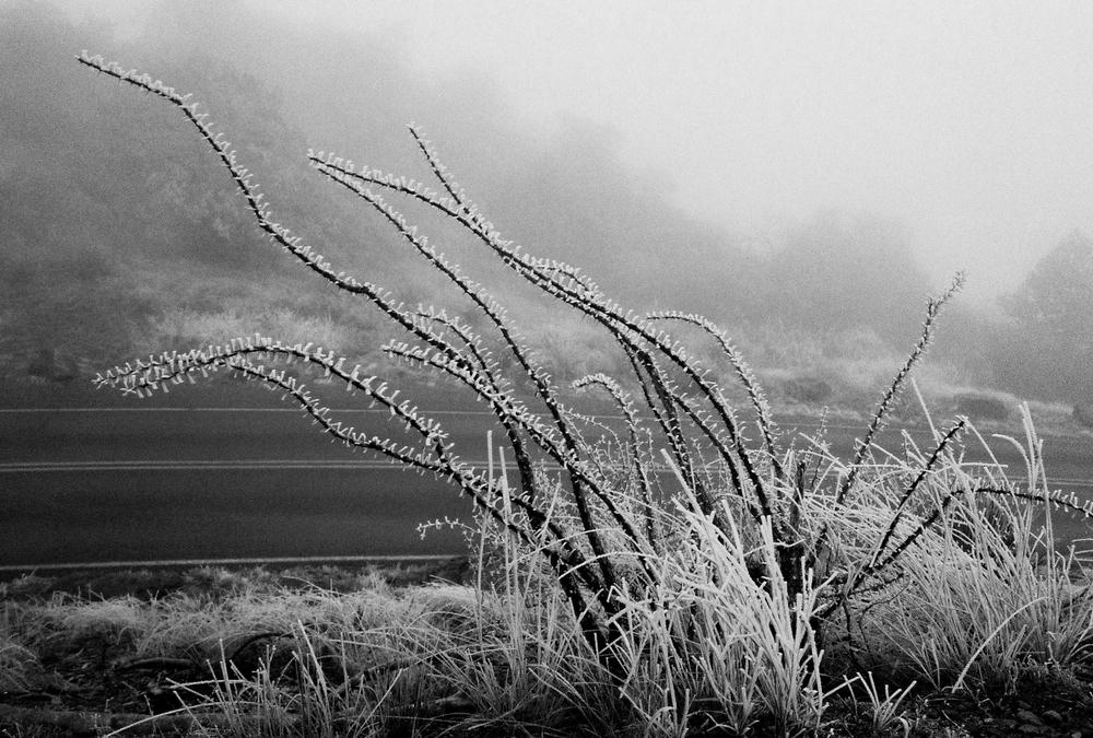 desertfrost.jpg