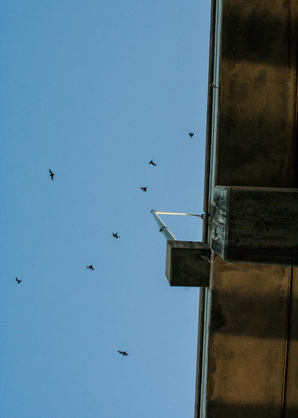 batbridge2.jpg