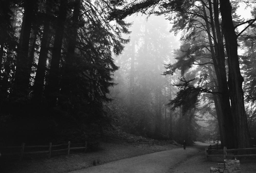 forestpathfogBW.jpg