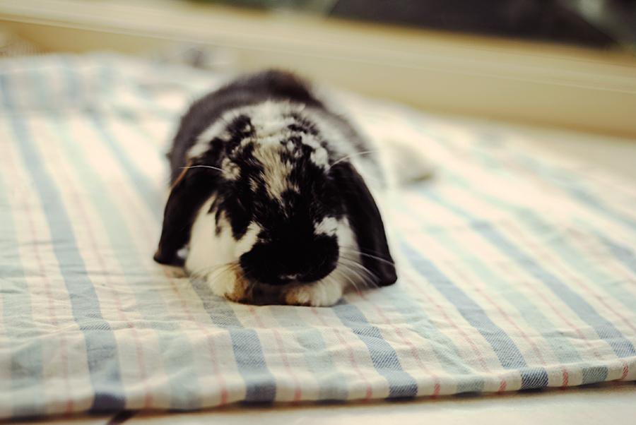 Oreo having a mid-afternoon nap