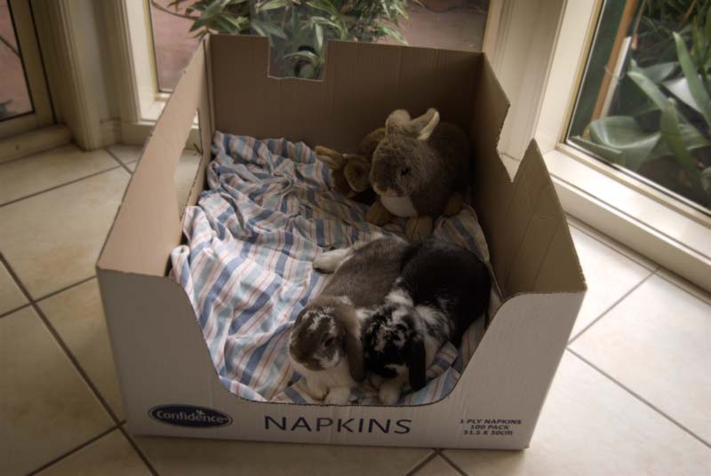 sleeping with their new friends