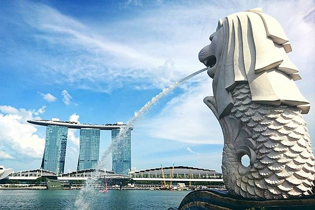 Not pictured: a herd of wild tourists posing with their mouths open or cupping their hands and a grumpy, jet lagged, hungry Stephanie in the background wishing the humidity could be toned down a bit. Great place to people watch though. . . . . . . #Singapore #merlion #Park #Asia #travel #lovetotravel #travelmore