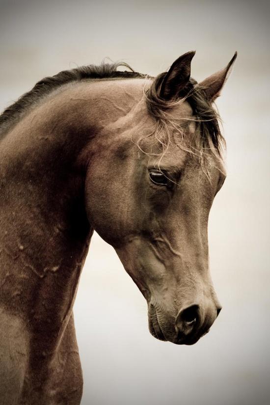 pinterest horse.jpg