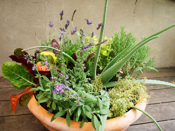 Small Container Planter   Graceful Gardens   Graceful Gardens offers consulting design and installation for urban ornamental and edible gardens.   Retail Value: