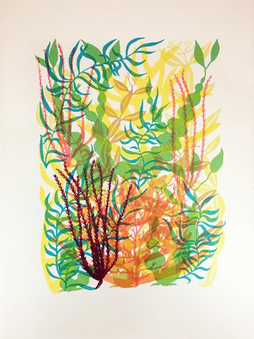 Becky Suss    Seaweed,  2009 Silkscreen