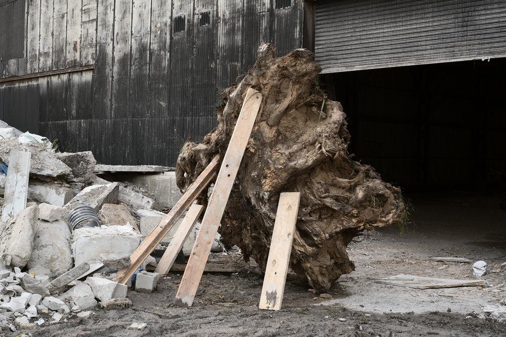 stump+behind+copy.jpg
