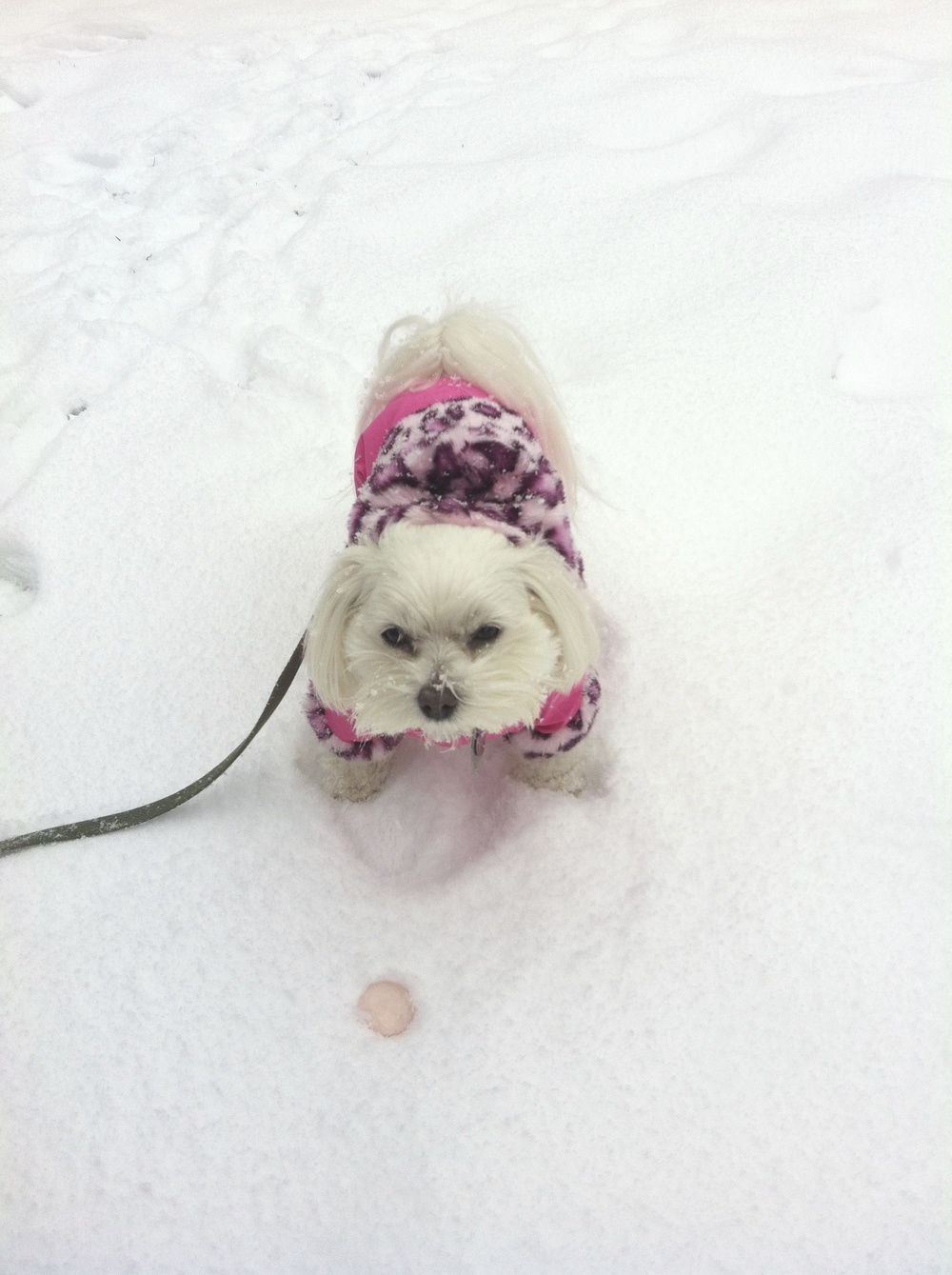 Lila playing in the snow with Nikki