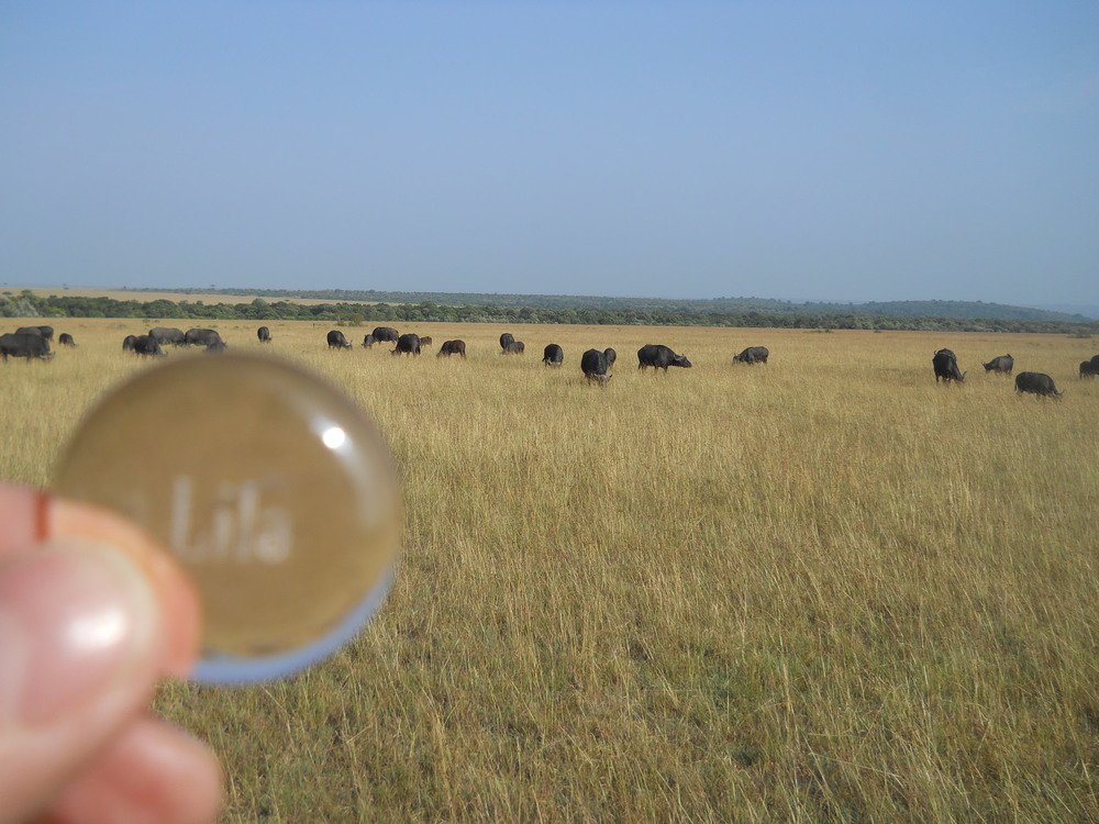 Lila stone in an African field amongst the wildebeests