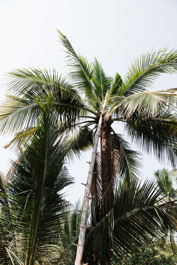 1603_Thailand_CoconutSugar-2.jpg