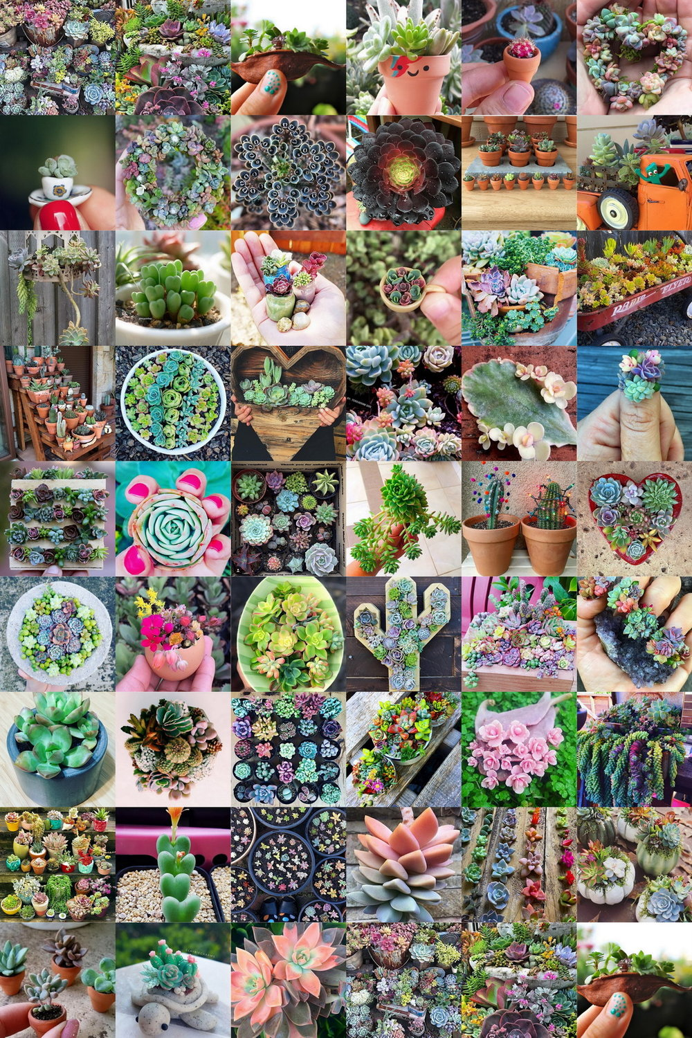 🌵 51 Jaw-Dropping Succulents @succulove