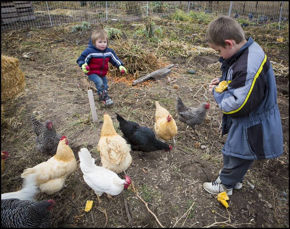 Of course, a farm visit would not be complete without at least one visit to our chickens.