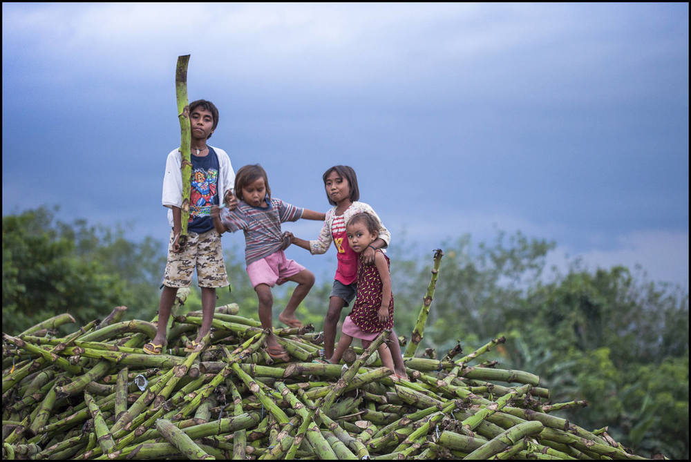 As the a storm approaches, smallholder's children play on a pile of banana stalks discarded from a recent banana harvest.