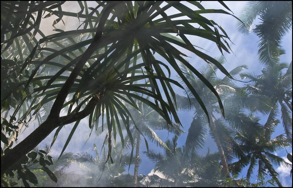 Campfire smoke and condensation from a river mix with a forest canopy that includes native trees, coconuts, and the pandanus tree, used for baskets and mats. The fruits are consumed by wild pigs and monkeys. In the right portion of the image, the edge of the lowland forest, marked by coconut trees, merges with the primary forest.