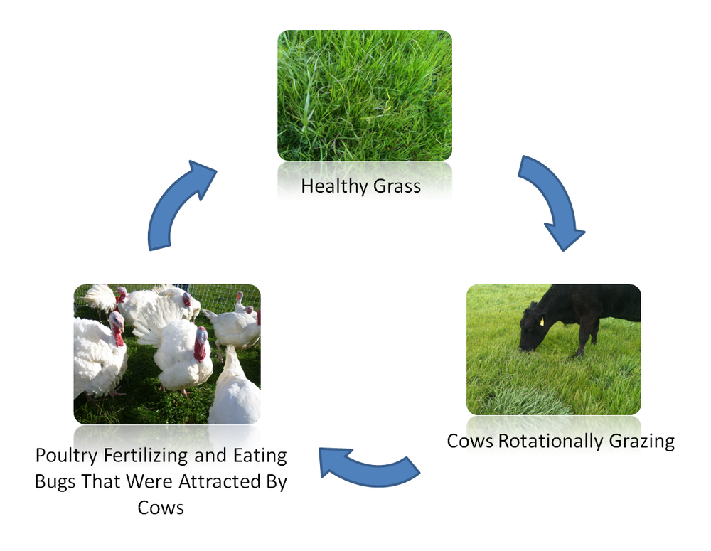 Grass Cycle.png