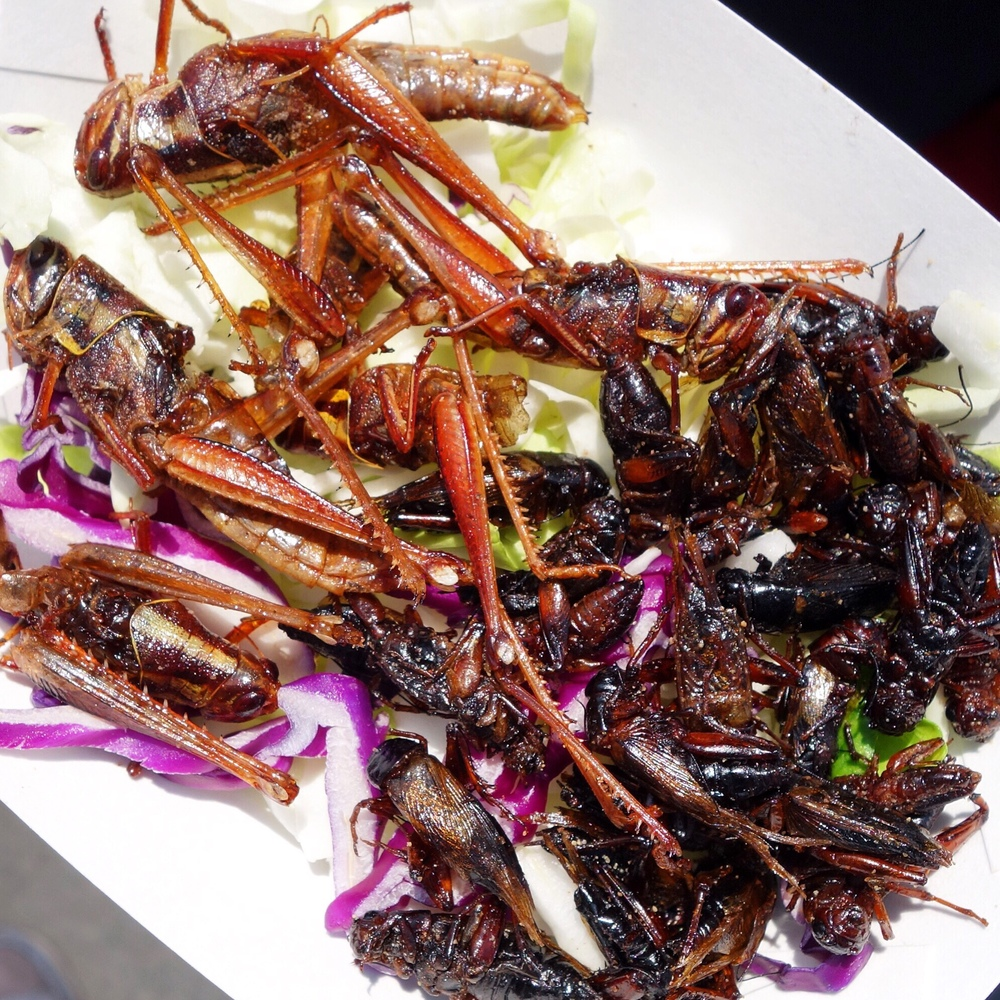 Fried Grasshoppers and Crickets