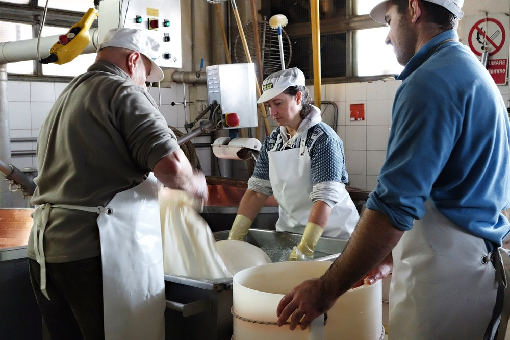 The cheese gets wrapped in a typical cloth and is placed in the mold to give it its final wheel shape.
